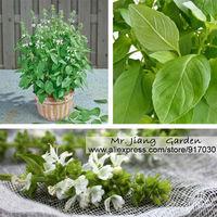 Lemon Basil Seed  * Ocimum Basilicum * Herb Flower Seeds  * Garden * Basil Lemon * Free Shipping