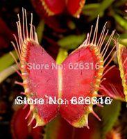 50pcs/lot VENUS FLYTRAP CARINIVOROUS SEEDS FLOWER SEED POT FLOWER PLANT GARDEN BONSAI FLOWER SEED DIY HOME PLANT