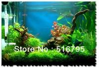 15 species WATER SEED box Aquarium Seeds*Fish tank plants seeds*Green doctor  450PCS/LOT hydroponics plant