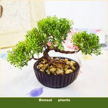 Decorativa flores vasos plantadores plantas artificiais bonsai pinheiro verdadeiro tocar falso planta em vaso em cima da(China (Mainland))