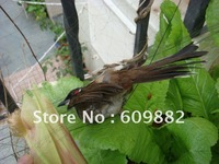 Free shipping   Nylon multifilament Bird netting, Mist Bird Capture Net, 15x3m, mesh:50mm, black color, Not to hurt the birds