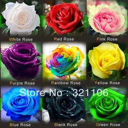 (THIS ORDER INCLUDE 9 PACKS EACH COLOR 50 SEEDS)CHINESE ROSE SEEDS - Rainbow Pink Black White Red Purple Green Blue Rose Seeds(China (Mainland))
