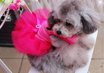 CUTE Beautiful ROSE LACE Small Pet Dog Cat Clothes dress size XS S M L