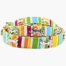 popular dog collar